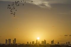 Sunset (Matias Click) Tags: sunset sky orange color birds silhouette photography nikon cityscape shadows miami great miamibeach d7000 cityscapeatsunset