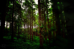 Whispers in the trees... (Jodie Maria) Tags: trees green girl dark woods quiet secret eerie creepy hidden ghostly whispers concealed shhh listen