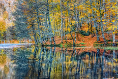 Yedigoller, Turkey (Nejdet Duzen) Tags: trip travel autumn lake reflection nature forest turkey trkiye bolu gl yansma orman turkei sonbahar seyahat doa yedigller ilobsterit