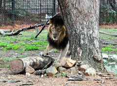 mysore zoo 14