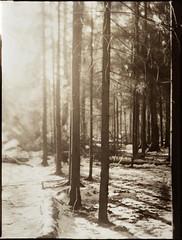 (NooFZz) Tags: bw landscape 9x12 photographicpaper paperpositive bulldog4x5 ensignaplanat