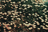 DSC_0771 (Mashael88) Tags: pictures flowers black mountains flower tree love nature beauty logo photography lights photo flickr photographer darkness mesh farm theend m moment charming شمس ahmed saudiarabia mash pandemonium the photograghy جمال تصوير ذكريات طبيعي تصويري السعودية اشجار مزرعة ظلام ساحر طبيعه مجموعة نبات مزرعه لحظات فوتوغرافي enchantingbeauty احتراف مشاعل mashael ميش فوتوغرافية تصويرفوتوغرافي فوتوغرفي mashae theeffectof مشاعلاحمد mashaelahmed مصورفتوغرافي النخلتان مطارالرياض ،mashael،mashael ahmed،photo مسش thebeautyofdocile شجرشروق اشياءالشمس الطيبعه