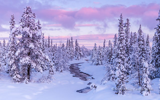 frozen forest river