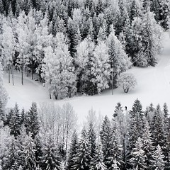 Puijo (Part 2) | Solitary Skier (Toni Kaarttinen) Tags: ski field forest suomi finland square finnland skiing squareformat skier kuopio finlandia birdview puijo フィンランド finlande finlândia savo finnország finlanda finlàndia финляндия finnlando iphoneography فنلندا instagramapp uploaded:by=instagram