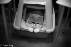 "untitled (""'kenlwc) Tags: leica cute monochrome animal cat relax mono glow exotic noctilux leicaglow leicam9p exoticshort"
