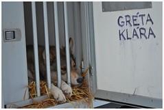 Greta Klara (KvikneFoto) Tags: norge srtrndelag rros femundlpet