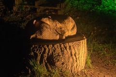 Sleepy Badger (csakkarin) Tags: samsung snowdrop cambo kingsbarns nx1
