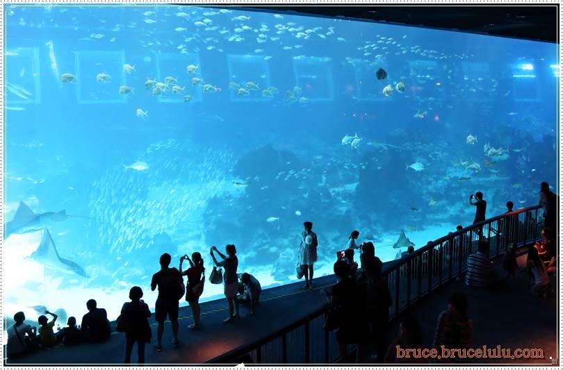 2015 新加坡Sear 水族館