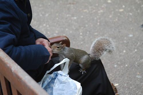 Lap Squirrel