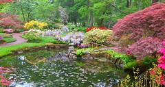 Japanese garden 5 (Frans Schmit) Tags: japan japanesegarden denhaag azalea thehague clingendael japansetuin fransschmit