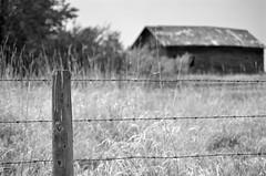 Homestead (faithroxy) Tags: blackandwhite canada history monochrome rural fence farm alberta barbedwire fencepost hff