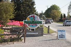 Tulip Fest (2 of 26) (evan.chakroff) Tags: flowers festival washington spring unitedstates tulips tulip april mountvernon tulipfestival mtvernon roozengaarde 2016
