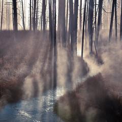 Tangled Creek, Yellowstone (MarkWarnes) Tags: yellowstonenationalpark silhouete sunrise tangledcreek dawn stream yellowstone fireholelakedrive steam morning creek wyomingyellowstonenationalpark water lowergeyserbasin tanglecreek ynp fog trees morningmist mist wyoming