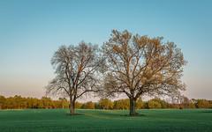 partners (dajonas) Tags: trees sunset field spring michigan may partners
