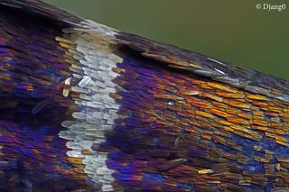 Butterfly's wing