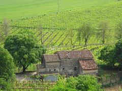 Una casa di campagna. (sangiopanza2000) Tags: roof verde casa tetto campagna vigneto viti rurale sangiopanza