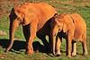 Parque de Cabárceno (Mantrize) Tags: naturaleza animals gorilla ostrich zebra avestruz animales giraffe hippo sealion santander cantabria cheeta gorila africanelephant adax whiterhino hipopotamo cebra cabárceno jirafa leonmarino elefanteafricano californiansealion rinoceronteblanco cantabriainfinita parquedecabárceno guepardos patagoniansealion parquedelanaturalezadecabárceno leonmarinodecalifornia leonmarinodelapatagonia