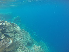 Reef outside of Pohnpei.