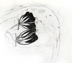 Pencil and Oil Pastel Drawing of a Dancer in the Queen of the Night (Night-blooming Cereus) (elizabatz.jensen) Tags: flower pencil dancers drawing queenofthenight oilpastel cereus orchidcactus nightblooming