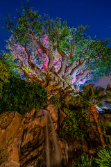 Animal Kingdom - Tree of Creatures (Jeff Krause Photography) Tags: life park tree its animal night bug us waterfall orlando unitedstates florida kingdom disney theme wdw tough hdr tol