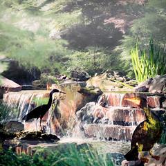 The Dark Intruder (Lemon~art) Tags: heron nature birds fog landscape waterfall rocks stream manipulation cormorant hiddengarden kreativepeople treatthis