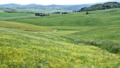E' scoppiata primavera - Spring broke out (Jambo Jambo) Tags: italy panorama primavera landscape spring italia hills tuscany toscana grosseto colline maremma casteldelpiano maremmatoscana montenerodorcia jambojambo sonydscrx100 maremmacountryside