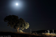 The loner (The Whisperer of the Shadows) Tags: moon tree night stars landscape geotagged arbol 50mm noche paisaje luna estrellas ciudadreal lamancha landscapesfromlamancha gassetreservoir