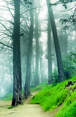 Chasing fog (-Alberto_) Tags: california fog oakland 35mmfilm nikonfa kodakektar nikkor50mm12 reedwoods