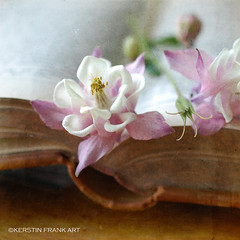 Still life with Colombine (Kerstin Frank art) Tags: stilllife plant flower texture garden book blossom pastel bouquet colombine
