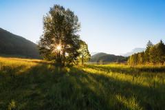 Geroldsee, Bayern-5347 (Holger Losekann) Tags: krn bayern deutschland de baum tree sonnenaufgang sunrise blendenstern landscape landschaft natur nature geroldsee amgeroldsee bavaria