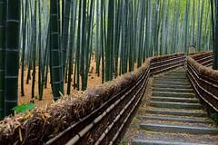 The bamboo path (Myajima) Tags: graveyard japan path bamboo stairway japon escalier chemin bambou cimetire