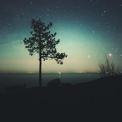 Untitled (unijaz) Tags: ocean light tree water suomi finland stars darkness serene emsalo