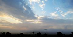 Volando hacia el amanecer  (Qu pequeo!) (elrayman210) Tags: canon amanecer ave nubes pequeo pequeno azulyamarillo calidoyfrio sx50hs
