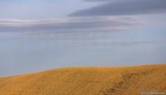 20160704_crete_senesi_siena_tuscany_66d67 (isogood) Tags: italy landscapes horizon country scenic tuscany crete siena cretesenesi asciano senesi