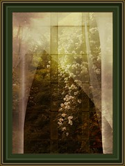 through the window (bloorose-thanks 4 all the faves!!) Tags: flowers roses texture window photo curtains paintshoppro abstractcurves