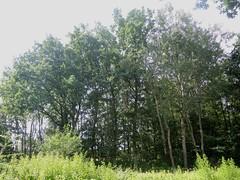 Am Kleinen See, Lbeck , NGID1905763641 (naturgucker.de) Tags: lbeck kleinersee naturguckerde cwolfgangkatz ngid1905763641