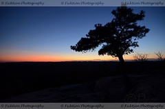 Ever Watchful (ficktionphotography) Tags: winter sunset shadow sun newyork tree nature silhouette bearmountain