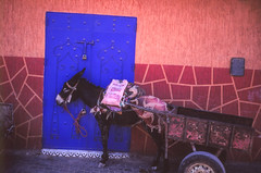 Donkey and color @ Marrakech (PaulHoo) Tags: film analog velvia fujifilm color saturized saturization 2016 marrakech marocco africa city urban contax t2 lightroom scan 35mm medina donkey blue contrast ilobsterit