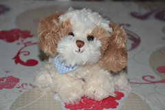 Little Dog Bukowski (Aurelmistinguette) Tags: dog chien little fluffy plush collection petit bukowski mignon peluche kawa aurelmistinguette