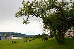 Linzfest 2013 -Tag 3 (austrianpsycho) Tags: tree linz wiese baum linzfest donaulände 20052013 linzfest2013