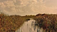 Everglades Wildlife Management Area (Oliver Leveritt) Tags: nature florida bigma fortlauderdale everglades sigmabigma airboattour evergladeswildlifemanagementarea oliverleverittphotography bigmaos sigma50500mmf4563apodgoshsm nikond7100 sigmabigmaos captainshawn