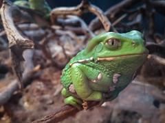 Froggy (morozgrafix) Tags: sanfrancisco california unitedstates californiaacademyofsciences samsunggti9500