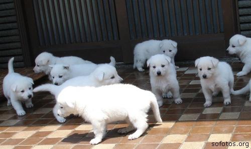 Vários filhotes de cachorros