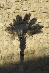 (Caitlin H. Faw) Tags: light shadow color tree stone wall canon landscape eos israel jerusalem may palm 5d oldcity yerushalayim markiii 2013 caitlinfaw caitlinfawphotography