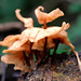 "Fungi • <a style=""font-size:0.8em;"" href=""http://www.flickr.com/photos/101688182@N03/9834507486/"" target=""_blank"">View on Flickr</a>"