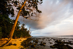New day at Havelock, Andaman Islands (marcusfornell) Tags: morning sunset india beach sunrise island asia asien pacific indianocean indien havelock andaman southasia andamanislands andamanandnicobar sdasien gulfofbengal