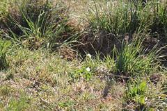 IMG 4284 Grasses in Australia (Eminpee Fotography) Tags: australia woopwoop