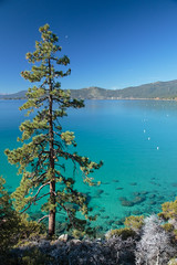 Lake Tahoe (TomFalconer) Tags: blue lake tree green beach water pine crystal tahoe clear hidden