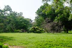 Bidadari Muslim section (Jnzl's Public Domain Photos) Tags: trees green nature singapore muslim cemetary development section exhumed publicdomain bidadari