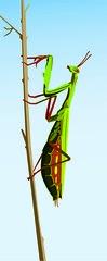 Jon Metivier: Grasshopper